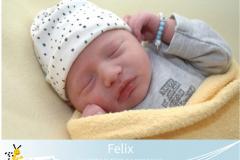 Felix-6-13-47-3400-52